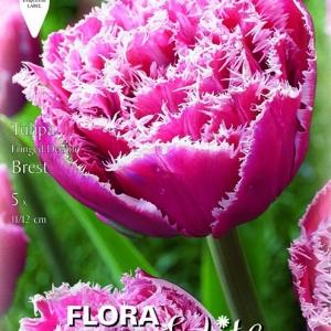 Rojtos leplű tulipán