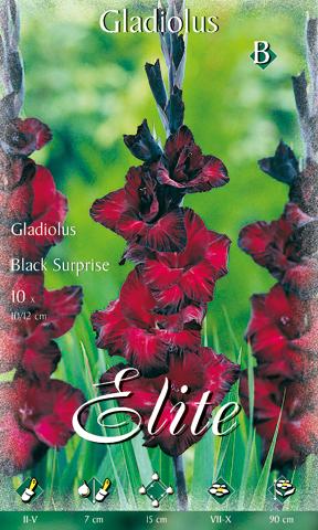 fekete meglepetésnek hívott kardvirág. A virág színe egészen sötét bordó, és a széleken matt feketébe megy át a színe.