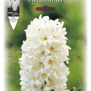 fehér virágú jácint füzér alakú virágok