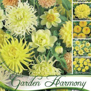 Dália virágok halványsárga színűek, de több árnyalatban.