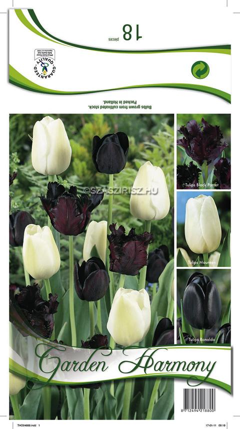 Fekete és fehér színű tulipánok egymásal keverve. Nagyon impresszív